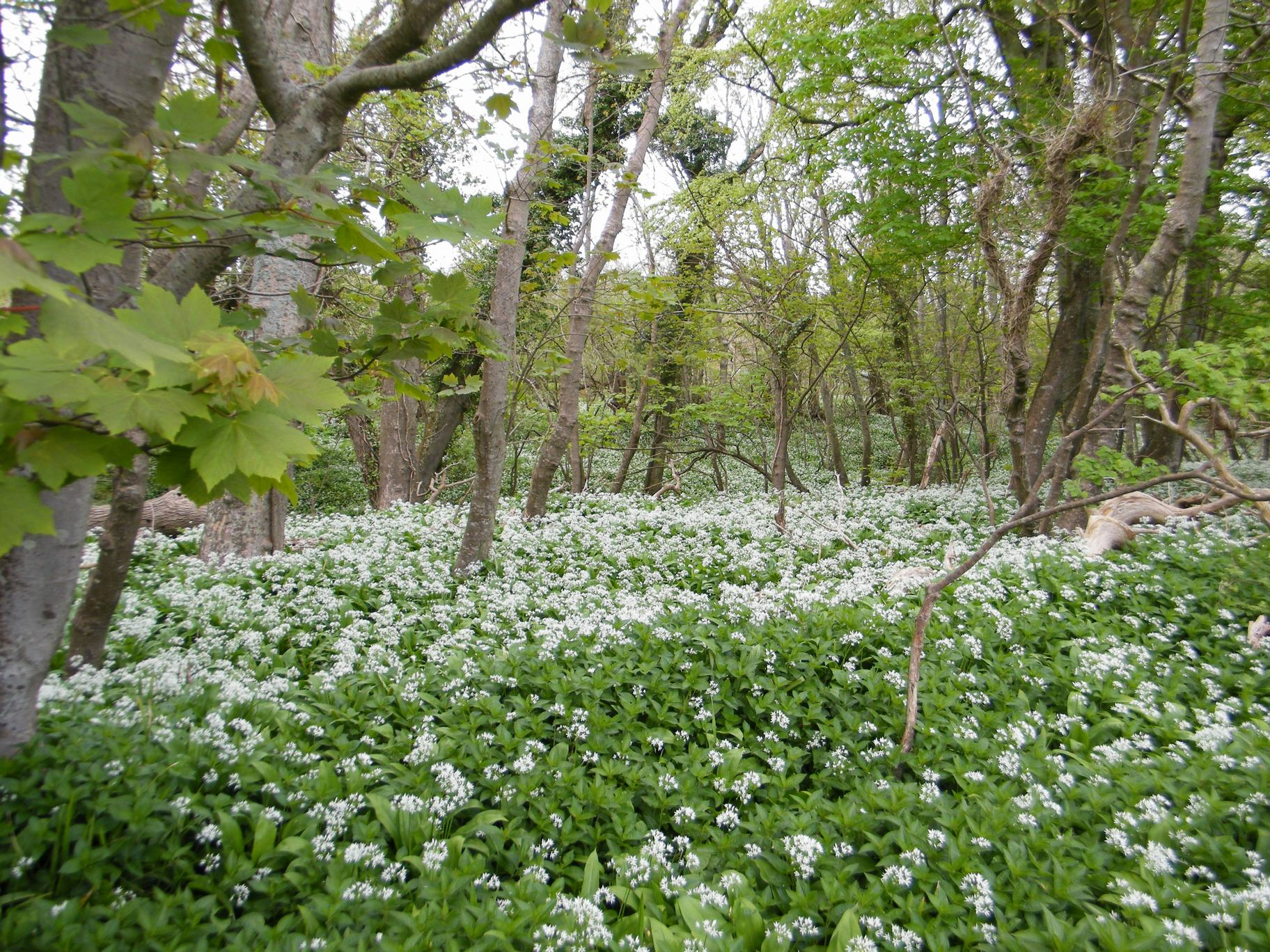 CANCELLED: Ashmore Wood and Stubhampton Bottom