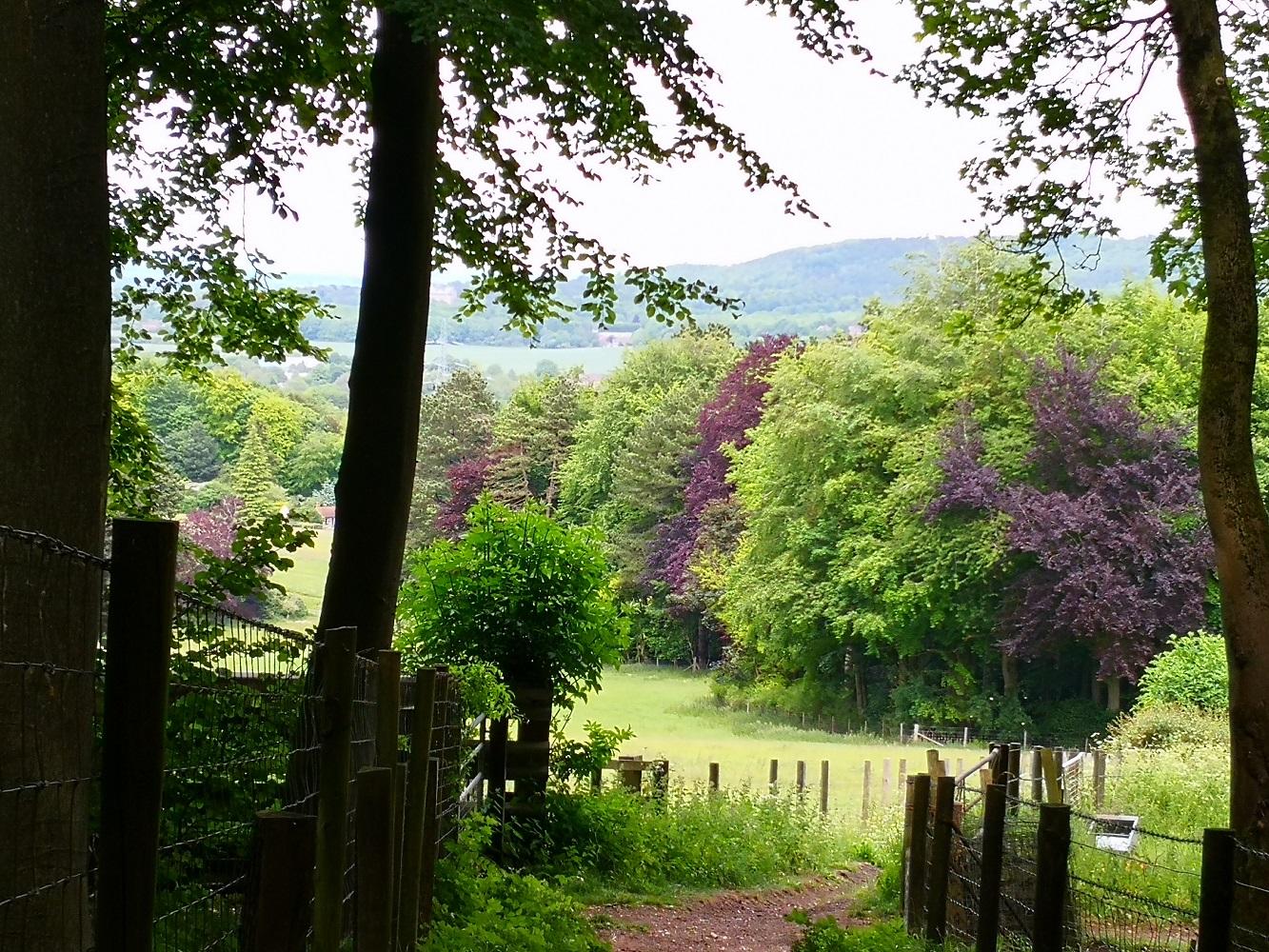 Chilterns woodland