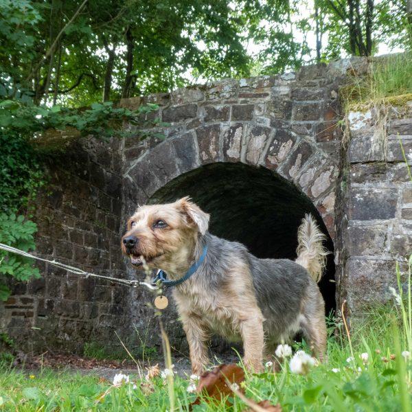 Frankie, Onllwyn walk, 2019 GOC AOG-1130251