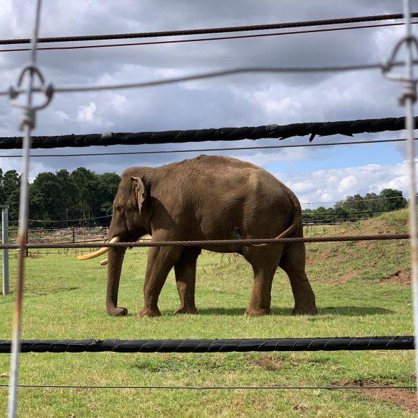 Woburn Safari Park elephant
