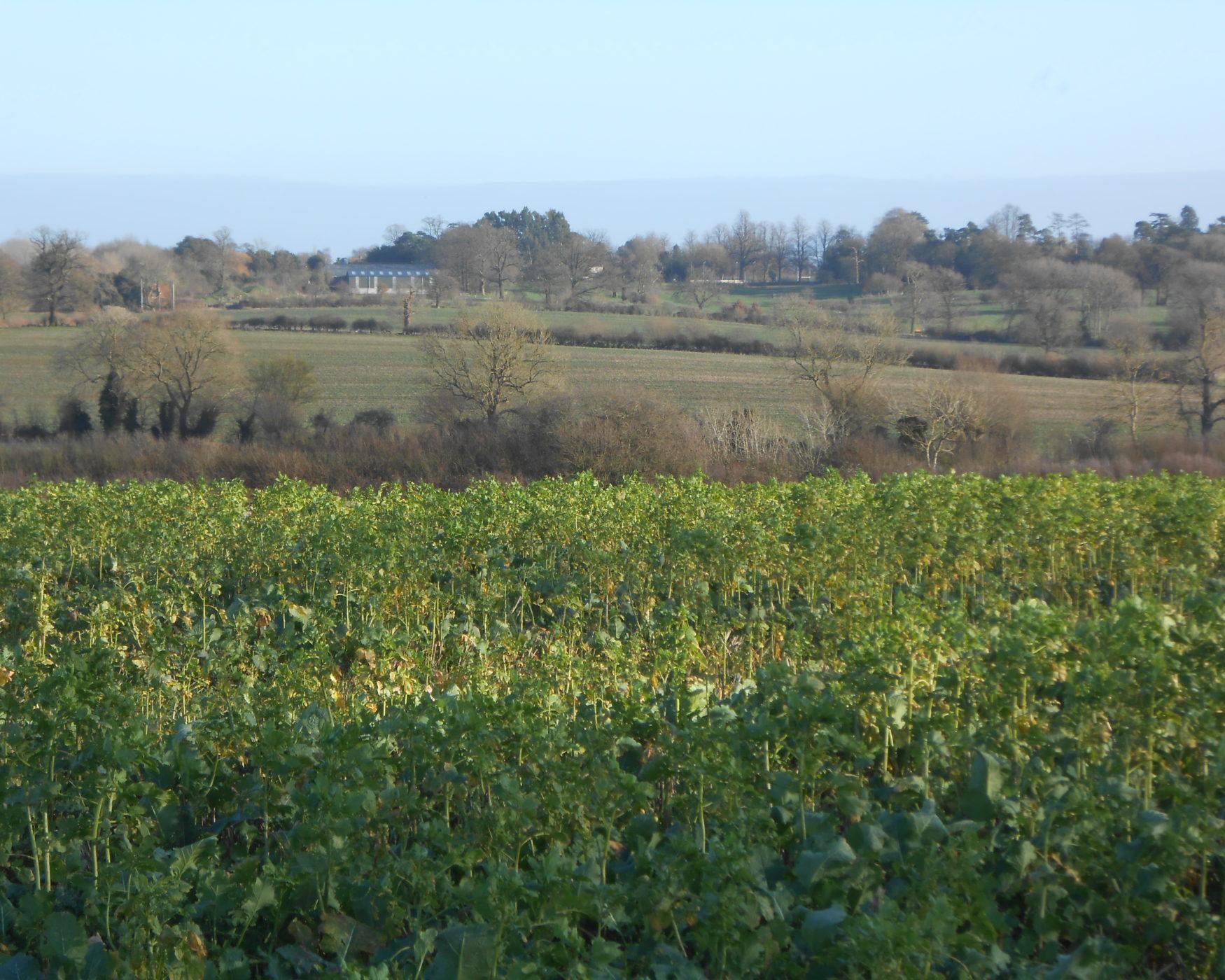 View from Cross Bucks Way towards Winslow